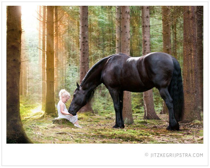 Het Fries paard is vanwege zijn koele en betrouwbare karakter geschikt voor alle leeftijden.