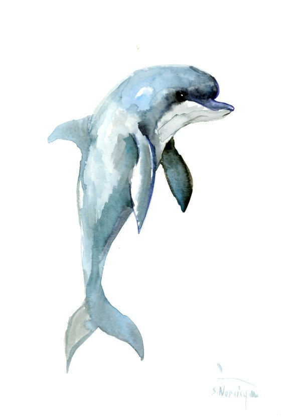 Dolphin, 12 x 9 in, original watercolor painting 12 X 9 in, dolphin art dolphin…