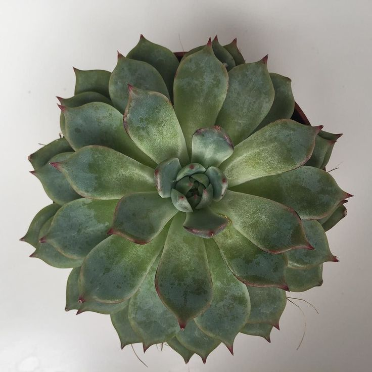 Succulent sale now on! #sale #midseasonsale #plantsale #presents