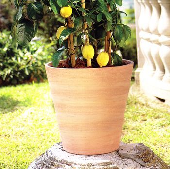 Frost Garden Pots 39 best our new planters images on pinterest clay pots terracotta new white clay cone planters will be a best seller large sizes frost resistant workwithnaturefo