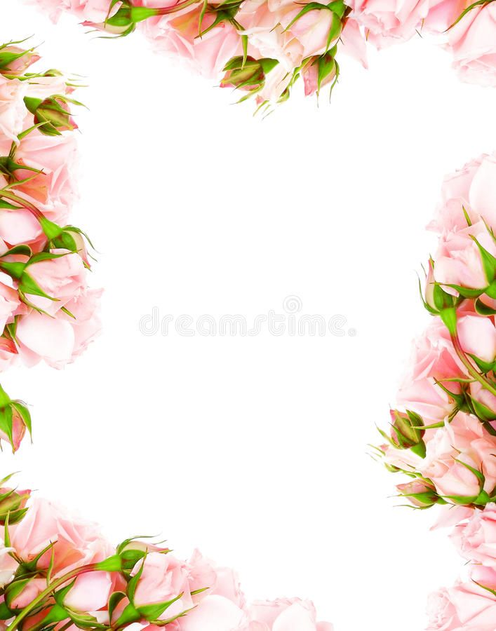 Fresh Roses Frame Fresh Pink Roses Frame Border Isolated On White Background Sponsored Frame Vintage Flower Backgrounds Rose Frame Pink Roses Background