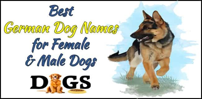 Best German Dog Names For Female Male Dogs Latest Dog Names