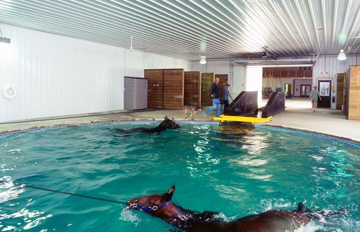 Sawgrass Standardbreed Horse Training Center Crete
