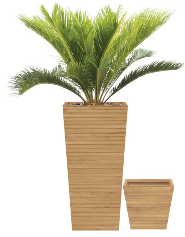 Solid Bamboo Planter   Google Search. Plants In PotsTall PlantsBamboo  PlanterBathroom ShowroomsProject IdeasContainer ...