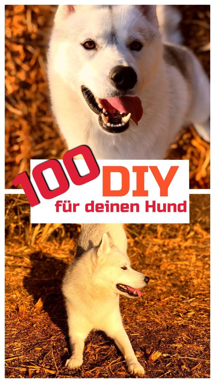 100 DIY für deinen Hund Undercover Labrador Hunde