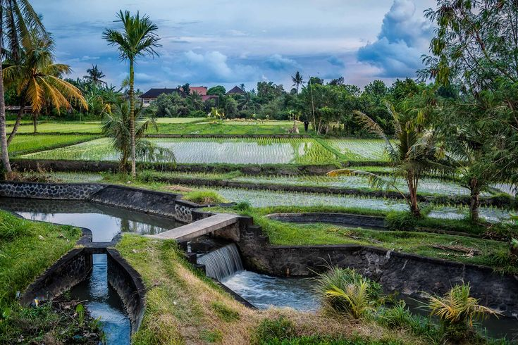 Rice field irrigation in rural Bali, Indonesia