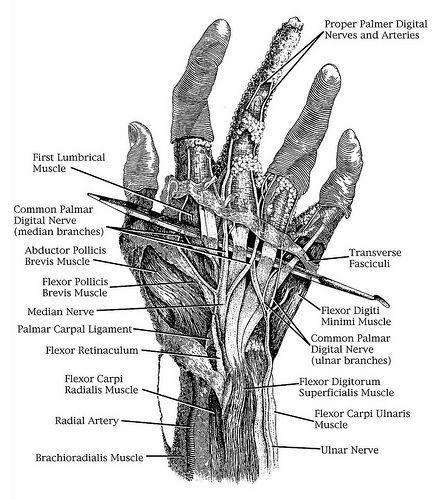 50 best anatomical studies images on pinterest