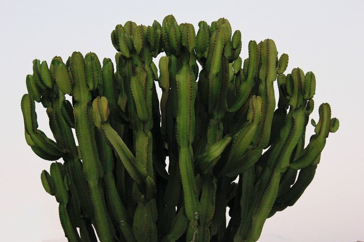 #cactus