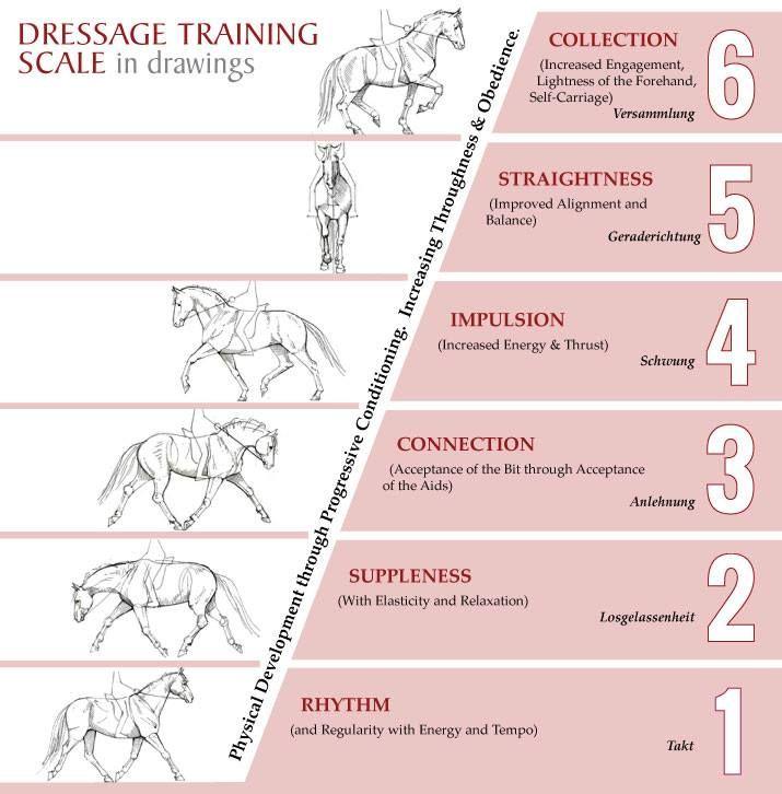 Kuvahaun tulos haulle training scale horse