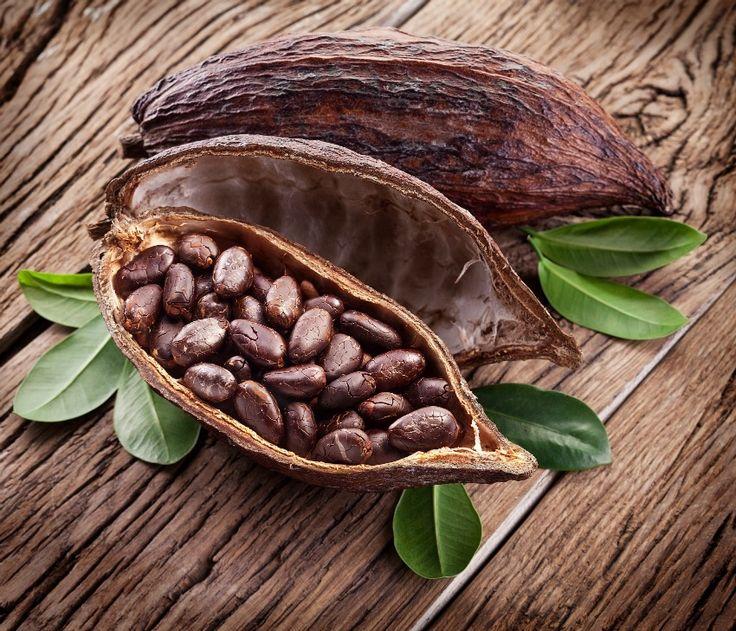 25 best theobroma cacao trending ideas on pinterest cacao fruit tropical - Les bienfaits du stepper ...