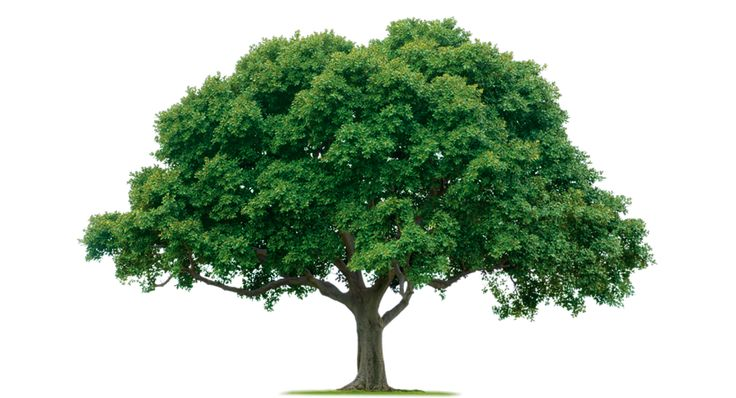 Have you ever noticed the branches and leaves of a #tree getting old and damage? Can you imagine what will happen to a tree if its branches are not taken care of from time to time? If you have never taken such thoughts into consideration, then don't worry.