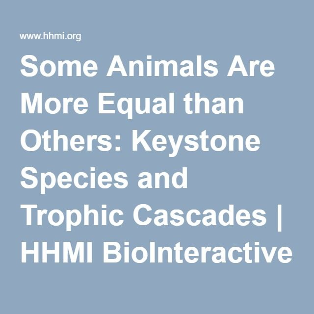 Some Animals Are More Equal than Others: Keystone Species and Trophic Cascades | HHMI BioInteractive :  Research driven, impact of keystone species