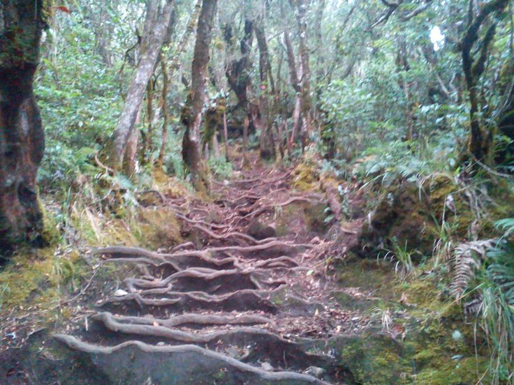 Root stair, TNGP, jalur gunung putri