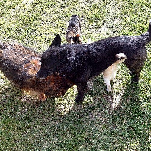 Chi l'ha detto che cani e gatti non vanno d'accordo? In Casetta si amano ❤️ #doggy #dog #pets #love #loveit