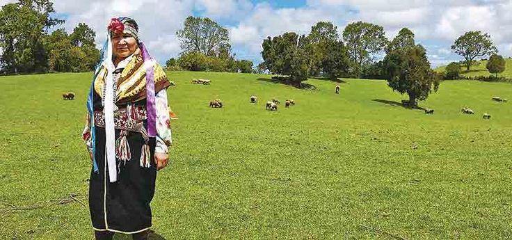 La viña mapuche más austral  del mundo