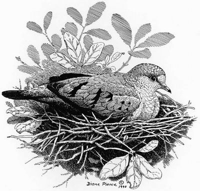 Karakalem Kuş Resimleri - Karakalem Kuş Çizimleri - Vazgecmem.NET