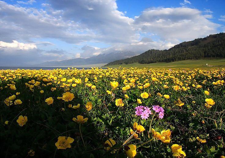 Fondo Pantalla Paisajes Prado lleno de flores - HD Wallpapers Gratis