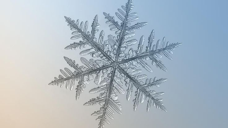 Large stellar dendrite snowflake, around 7 mm shot on a glass background with backlight, additional lens Helios 44M-5, January 2013, Moscow. (Alexey Kljatov)  Snowflakes Like You've Never Seen (PHOTOS) - weather.com