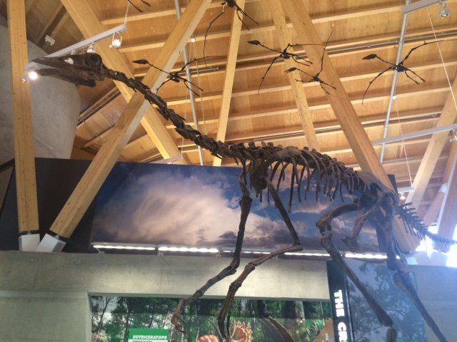 Réplique de Struthiomimus altus au Philip J. Currie Dinosaur Museum.