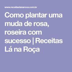 Como plantar uma muda de rosa, roseira com sucesso | Receitas Lá na Roça
