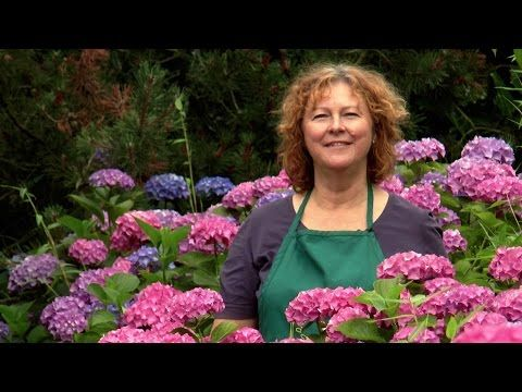 So könnt ihr Hortensien selbst vermehren – jetzt auch auf YouTube! | Gartenblog