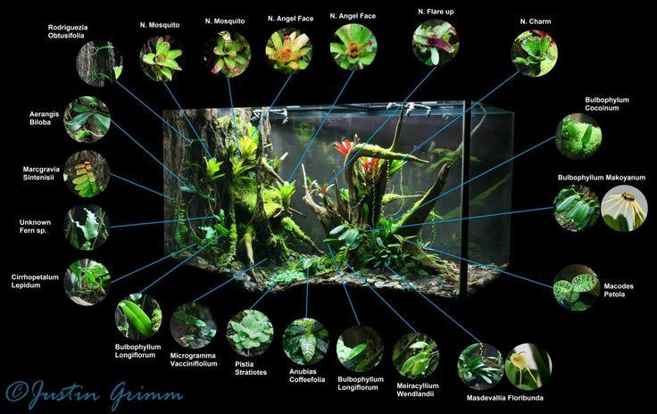 Peninsula Vivarium - In love with this vivarium.