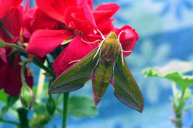 Moth: Photo