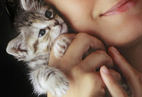 Precious new kitty  #unomatch #lifestyle #pics #hollywood #bollywood #pictures