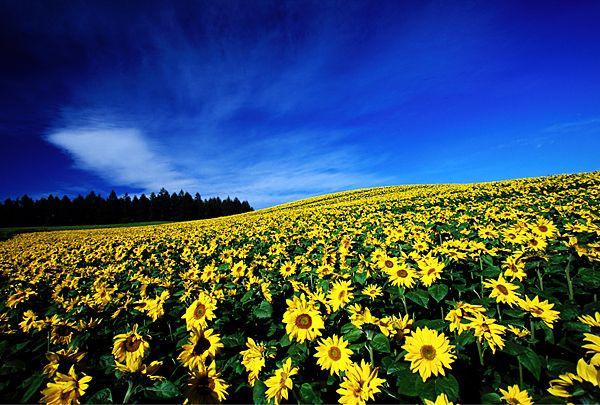 Biei, Hokkaido, Japan/ 北海道, 美瑛