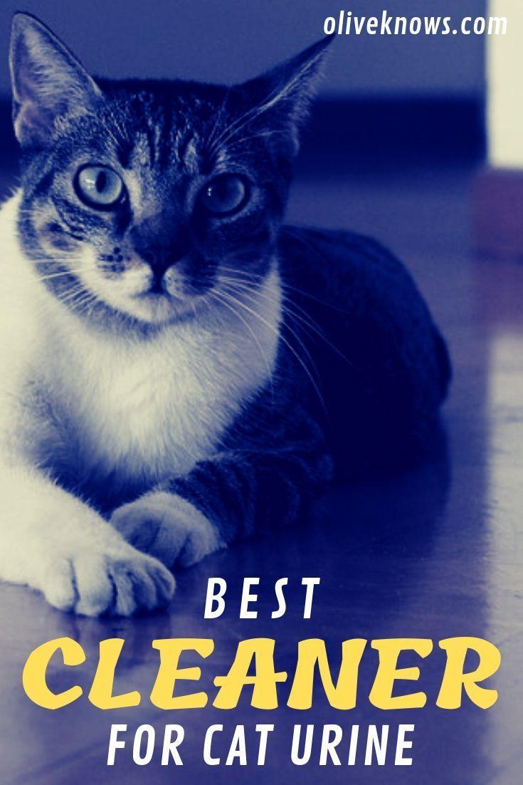 Best Cleaner For Cat Urine Cleaning Cat Urine Cat Urine Cats