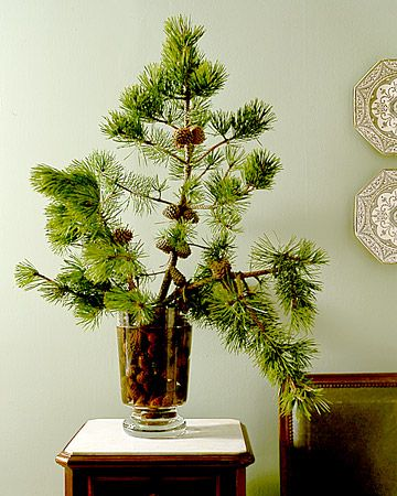 winter still life with pinecones