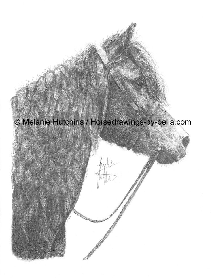 Portrait of Monty.  Copyright Melanie Hutchins / horsedrawings-by-bella  Follow me on Facebook: https://www.facebook.com/Horsedrawingsbybella.MelanieHutchins Twitter: https://twitter.com/MelHTheArtist YouTube: https://www.youtube.com/channel/UCZDEjNKuowAo92BhnMWWBzA