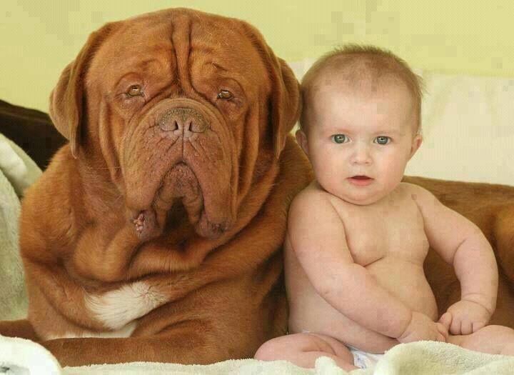 Bulldog köpek ve Bebek