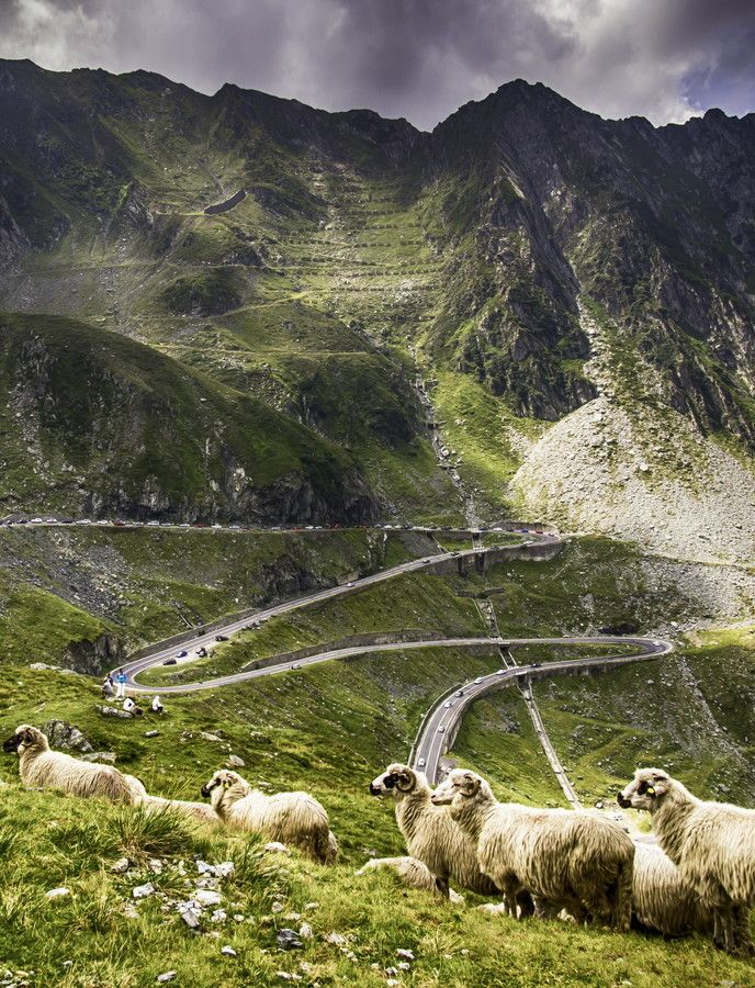 "Romania's second high altitude road, Transfagarasan was appointed by Top gear's host Jeremy Clarkson ""the best road in the world"". This road will take you beyond the clouds and will offer you 90 kilometers of twists and turns between the two highest peaks in the country in the best natural landscape.  by Iulian Bucatariu on 500px  www.romaniasfriends.com"
