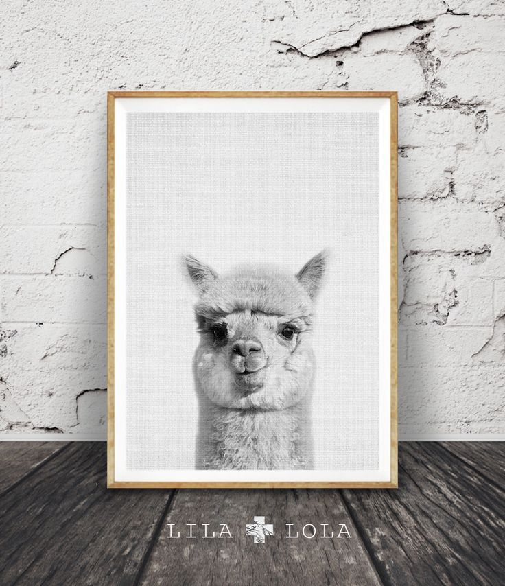 Alpaca Print, Nursery Decor, Alpaca Wall Art, Modern Minimalist Abstract Black and White Animal Print, Printable Art, Nursery Print, Grey by lilandlola on Etsy https://www.etsy.com/listing/261882236/alpaca-print-nursery-decor-alpaca-wall