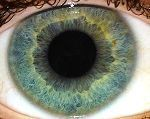 Gray Eye With Yellow Ring - Eye color - Wikipedia, the free encyclopedia