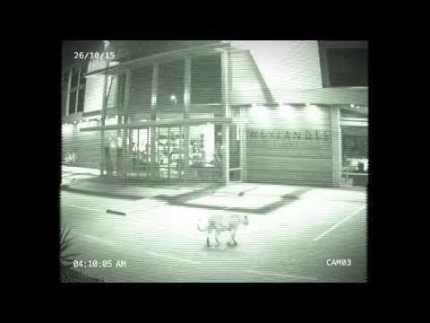 Leopard caught on CCTV in Mbombela at Weylandts store in Riverside | Lowvelder