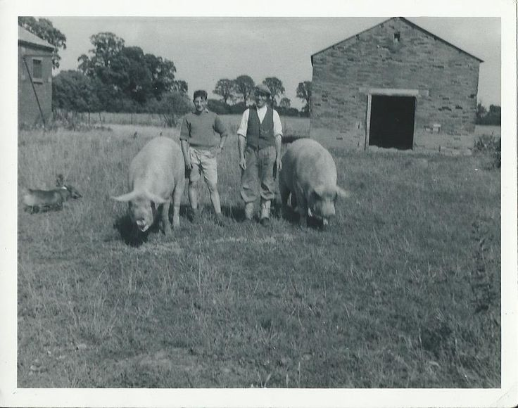 Allen and son hog roasts are a four generation company, cooking pork is in our herritage! This picture is of the family pig farm, and great granddad Allen, back in the 1950's