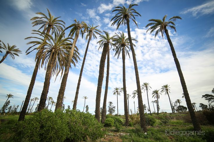 Abandoned palm trees by Diego Garnés on @500px