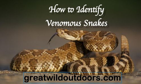 How to Identify Venomous Snakes