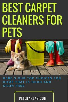 best carpet cleaners for pets reviewed clean homes ahoy