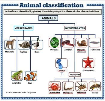 "♦♦ Eighteen colorful and informative posters (designed on A4 size [8"" x 11""]) paper showing the following groups:- ♦ Vertebrates:- Mammals Reptiles Birds Amphibians Fish ♦ Invertebrates:- Protozoa Annelids"