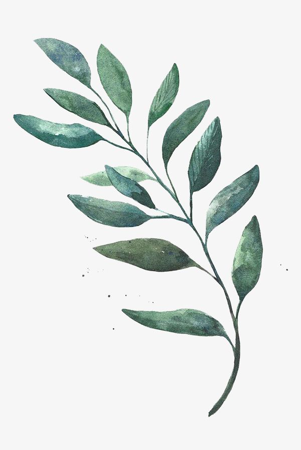 Watercolor Leaves, Watercolor Clipart, Green, Leaf PNG