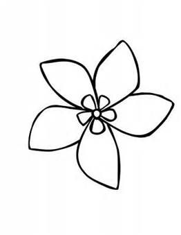 Stephanotis Flower Drawing