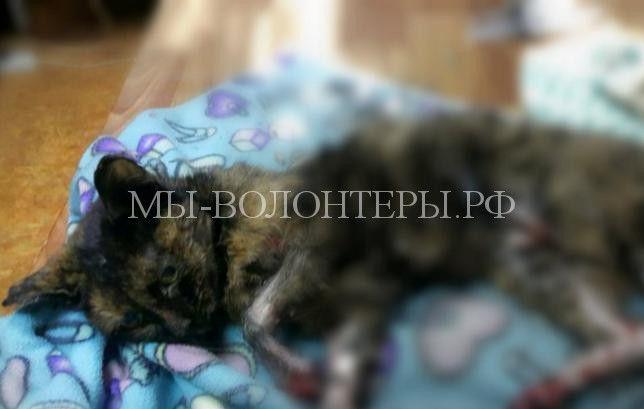 За жизнь кошки, спасшей чужих котят при аварии, борются ветеринары в Астане  http://xn----dtbjxcjfbus6gj.xn--p1ai/animal-protection/animal-resque/%d0%b7%d0%b0-%d0%b6%d0%b8%d0%b7%d0%bd%d1%8c-%d0%ba%d0%be%d1%88%d0%ba%d0%b8-%d1%81%d0%bf%d0%b0%d1%81%d1%88%d0%b5%d0%b9-%d1%87%d1%83%d0%b6%d0%b8%d1%85-%d0%ba%d0%be%d1%82%d1%8f%d1%82-%d0%bf%d1%80%d0%b8/ Все произошло на одном из предприятий