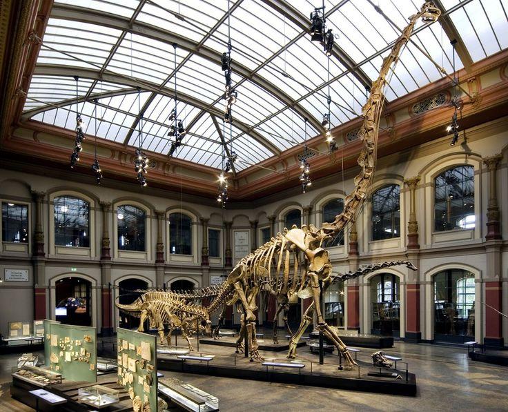 Brachiosaurus im Museum für Naturkunde Berlin