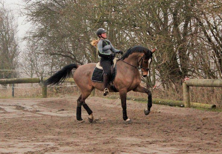 Heste under uddannelse | Holfelt stutteri – hestesalg, opdrætning og træning til privat og erhverv  #stutteri #Hestesalg #