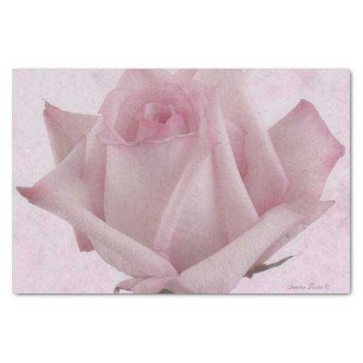 "Soft Pink Rose Flower 10"" X 15"" Tissue Paper"