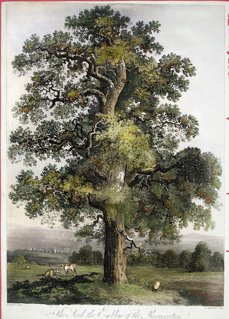 tree thorton painting