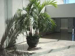 Image result for potted trees